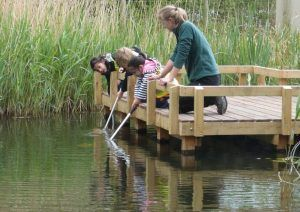 Pond dipping is such fun